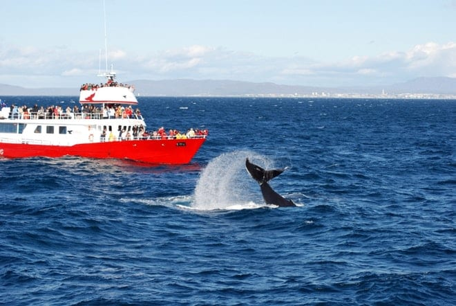 GOLDEN CIRCLE AND WHALE WATCHING